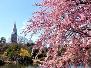 近隣観光:新宿御苑(都心にいてこの景観に驚きます。当ホテルから約30分)