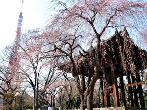 近隣観光:増上寺(徳川家の菩提寺です)当ホテルから徒歩7分、催し物もよく行われます